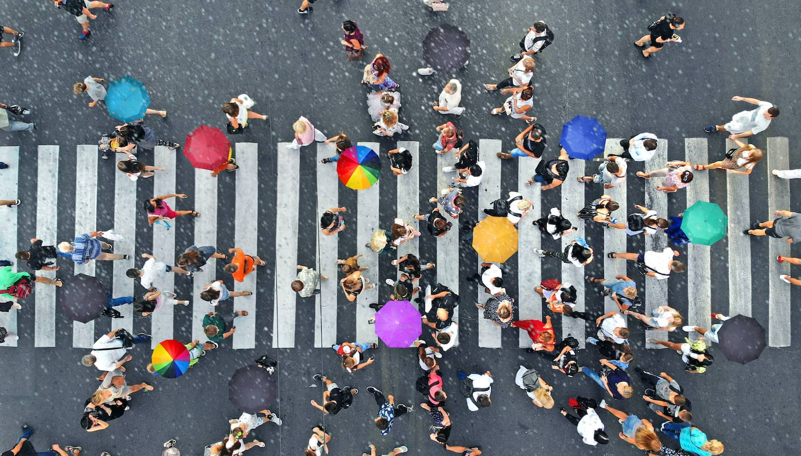 Rainy weather. People crowd with umbrellas moving through the pedestrian crosswalk. Top view from drone.